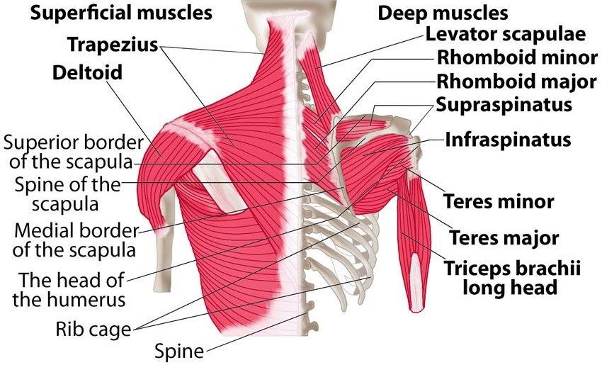 תרגילי פיזיותרפיה לכתף